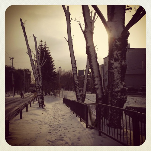 snow_8197331461_o.jpg